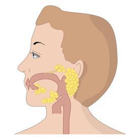 Speicheldrüsen mund